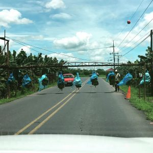 Costa Rica Bananas crossing