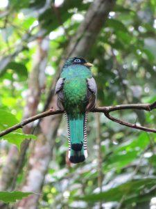 Corcovado national park bird